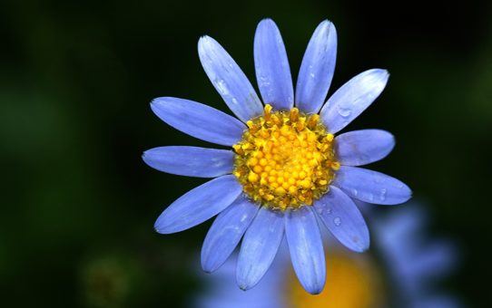 Virág a Büdöstónál